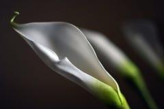 Tre piante Immagine Stock Libera da Diritti