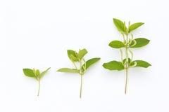 Tre piante fotografia stock