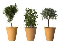Tre piante conservate in vaso Fotografia Stock Libera da Diritti