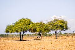 Tre piccoli alberi fotografia stock libera da diritti
