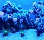 Tre piccoli anemoni fotografia stock