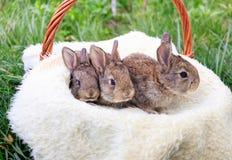 Tre piccoli e bei coniglietti immagini stock