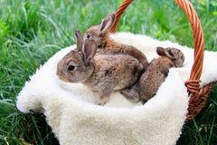 Tre piccoli e bei coniglietti fotografia stock