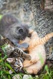 Tre piccoli gattini che giocano in un'erba immagini stock libere da diritti