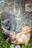 Tre piccoli gattini che giocano in un'erba fotografia stock