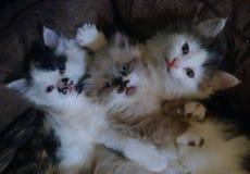 Tre piccoli gattini con i loro guanti fotografia stock