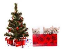 Tre piccoli gattini in regalo Immagini Stock