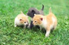 Tre piccoli gattini svegli che camminano su un'erba verde immagine stock libera da diritti