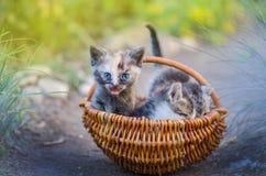 Tre piccoli gattini svegli che posano circondato insieme dai fiori all'aperto fotografia stock libera da diritti