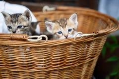 Tre piccoli gattini in un canestro Immagine Stock