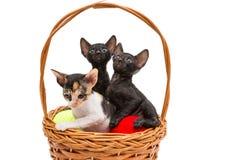 Tre piccoli gattini in un canestro Fotografie Stock