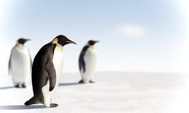 Tre pinguini in Antartide Immagine Stock Libera da Diritti