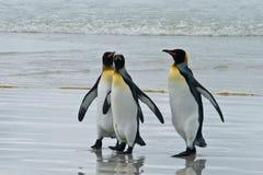 Tre pinguini di re Immagine Stock