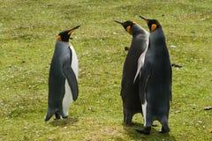 Tre pinguini di re Fotografia Stock