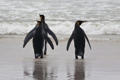 Un supporto di tre pinguini di re Immagini Stock