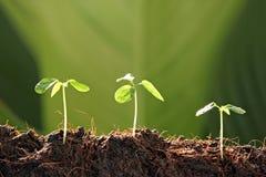 Tre plantor i grönsakträdgård. Royaltyfri Bild