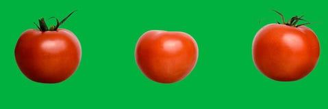 Tre pomodori - pomodoro su verde di chiave di intensità immagine stock libera da diritti