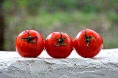 Tre pomodori sulle pareti bianche Fotografia Stock