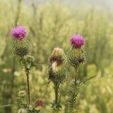 Tre punte dei fiori Fotografia Stock Libera da Diritti