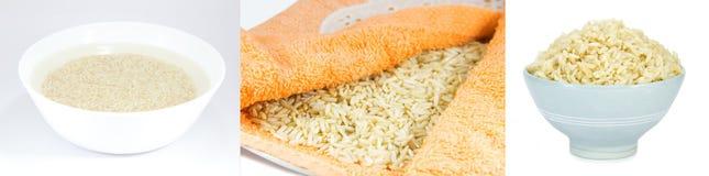 Tre punti per cucinare riso sbramato germinato Fotografia Stock Libera da Diritti