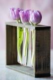 Tre purpura tulpan i ett litet exponeringsglas Arkivfoto