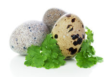 Tre quailägg med parsley Royaltyfri Bild