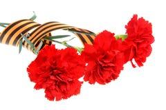Tre röda nejlikor som binds med det isolerade St George bandet royaltyfri foto