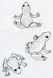 Tre rane illustrazione di stock