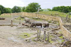 Tre Rhinos i zooen Royaltyfria Bilder