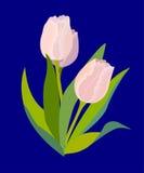 Tre rosa tulpan på blått Royaltyfria Bilder