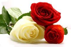 Tre rose Fotografia Stock