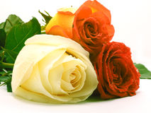 Tre rose Fotografie Stock Libere da Diritti