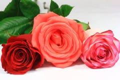 Tre rose lunghe variopinte del gambo Immagini Stock Libere da Diritti