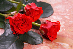 Tre rose rosse Immagine Stock Libera da Diritti