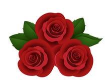 Tre rose rosse. Immagini Stock