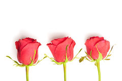 Tre rose rosse Immagine Stock