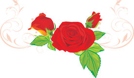 Tre rose rosse con l'ornamento Fotografia Stock