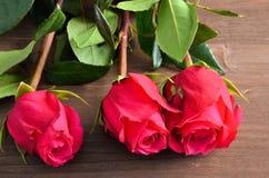 Tre rose rosse contro un fondo marrone Fotografie Stock Libere da Diritti