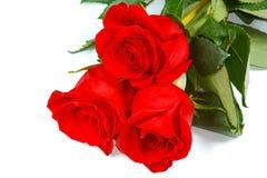 Tre rose rosse fresche Immagini Stock