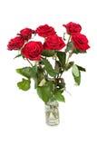 Tre rose rosse fresche sopra fondo bianco Fotografie Stock Libere da Diritti