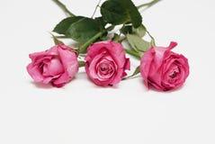 Tre rose rosse su una priorità bassa bianca Immagini Stock