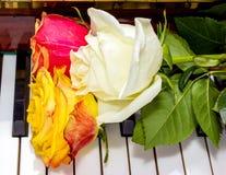 Tre rosor arkivbild