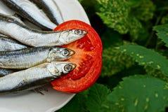 Tre saltad hamsafisk på en platta med en tomat i gröna sidor royaltyfri fotografi