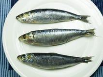 Tre sardine Fotografia Stock