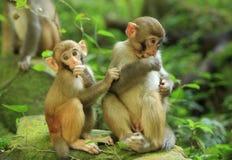 Tre scimmie in foresta immagine stock libera da diritti