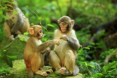 Tre scimmie in foresta immagini stock