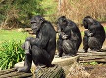 Tre scimmie saggie Immagini Stock Libere da Diritti