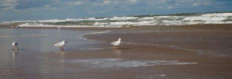 Tre seagulls på kusten royaltyfri bild