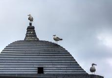 Tre seagulls som väntar på Godot på ett trätak på en grå färg, neutral värld royaltyfri fotografi