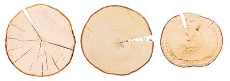 Tre sezioni trasversali di legno Immagini Stock